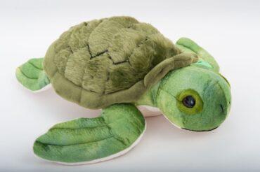 Glider Forever Turtle