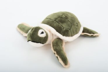 Hatch Forever Turtle