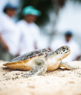 Private-Turtle-Release-Cayman
